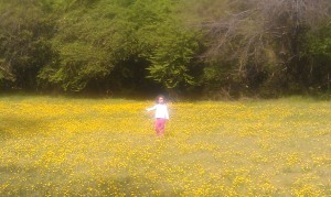 Queen of the Buttercups.